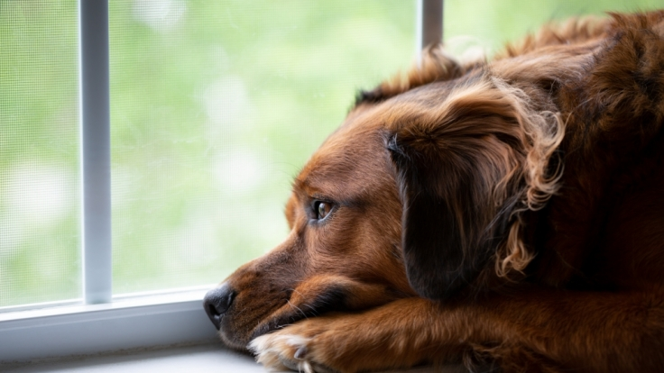 In Mölding soll ein Mann angeblich den Hund seiner Ex-Freundin vergewaltigt haben. (Symbolfoto) (Foto)