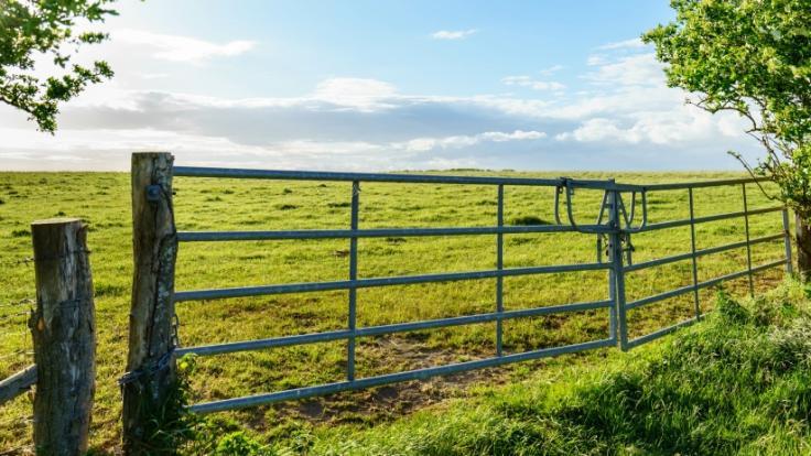 Ein Vater ist in einem Viehgatter gestorben. (Foto)