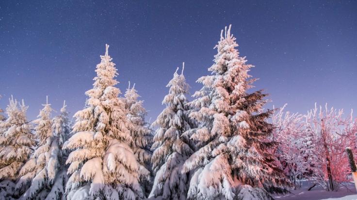 Schneebedeckte Nadel- und Laubbäume stehen bei Temperaturen weit unter null Grad am 06.01.2017 auf dem Fichtelberg bei Oberwiesenthal (Sachsen).