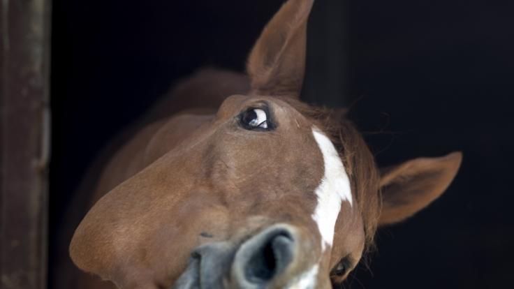In Aichwald wurde ein Mann beim Pferdesex erwischt. (Foto)