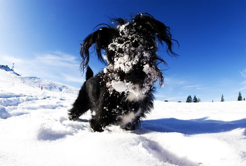 Профессиональные фото зимы 8
