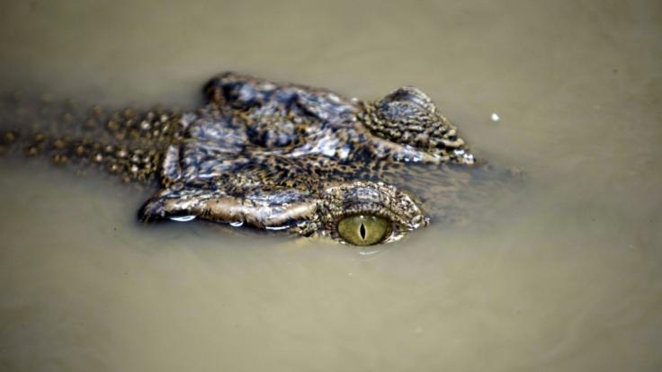 In Äthiopien hat ein Krokodil einen Pfarrer attackiert. (Foto)