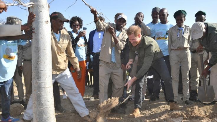 Prinz Harry pflanzt Bäume, die 200 Grundschüler aufgezogen haben.