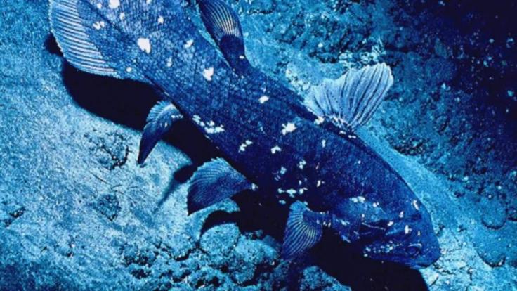 Mit diesem Fang hatten die Hai-Jäger vor Madagaskar nicht gerechnet. (Foto)