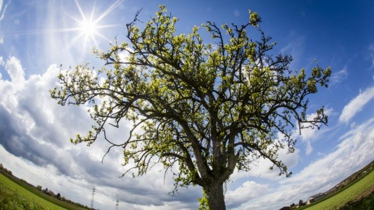 Der Frühling gibt mit Temperaturen über 20 Grad sein Stelldichein.