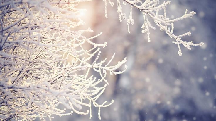 sondertilgung im dezember oder januar
