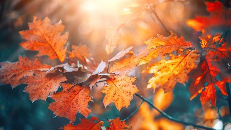 Dürfen wir uns auf einen sonnigen Oktober freuen? (Foto)