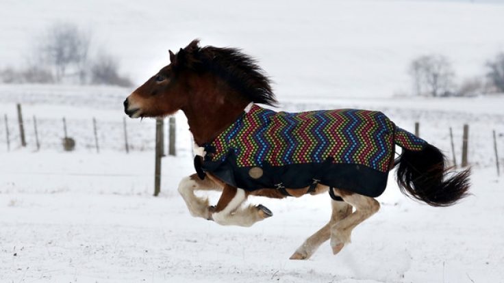 Ein Mann hatte Sex mit dem Pony seines Nachbarn. (Symbolbild) (Foto)