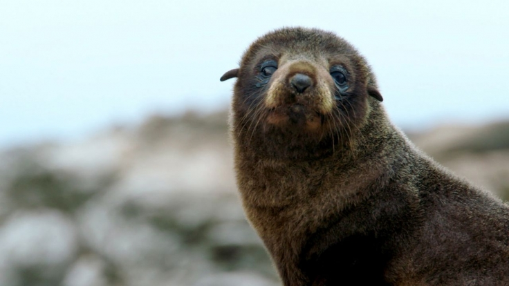 Neuseeland - Rivalen der Urzeit bei 3sat (Foto)
