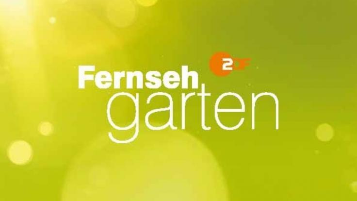 """Auch am 23. Juni 2019 bot der """"ZDF Fernsehgarten"""" reichlich Futter für Twitter-Spott. (Foto)"""