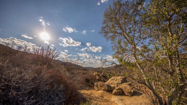 Wüste Wurzeln, starke Stämme bei Arte (Foto)