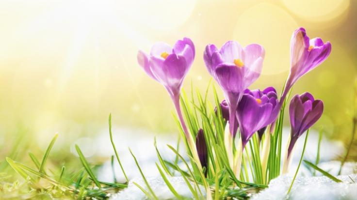 Der Frühling kehrt nach Deutschland zurück. (Foto)