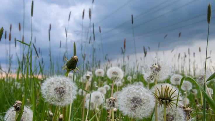 In den kommenden Tagen bleibt es heiß - aber auch Unwetter drohen in Teilen Deutschlands. (Foto)