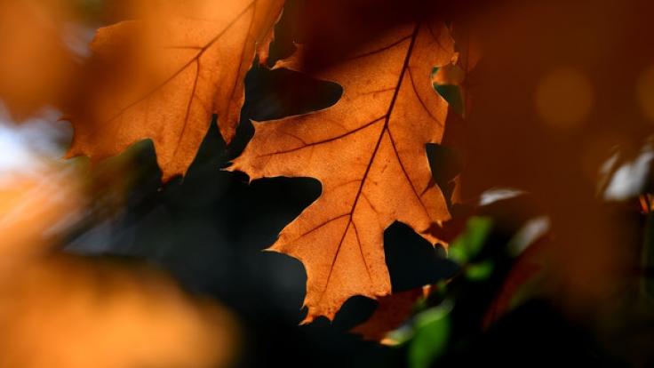 Am 22. September 2017 ist kalendarischer Herbstanfang.