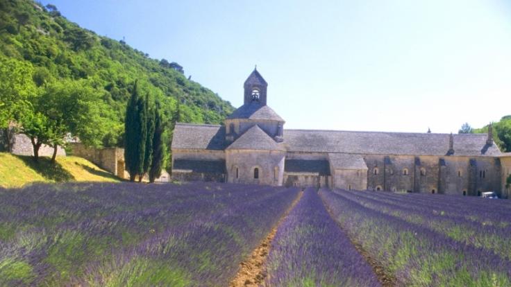 Schier endlose Felder und ein betörender Duft: Die Lavendelblüte in Südfrankreich. (Foto)