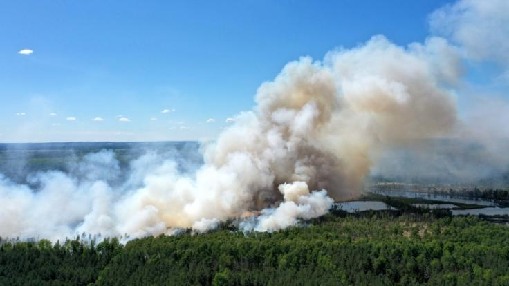 In Brandenburg wurde die Waldbrandstufe fünf ausgerufen. (Symbolfoto)