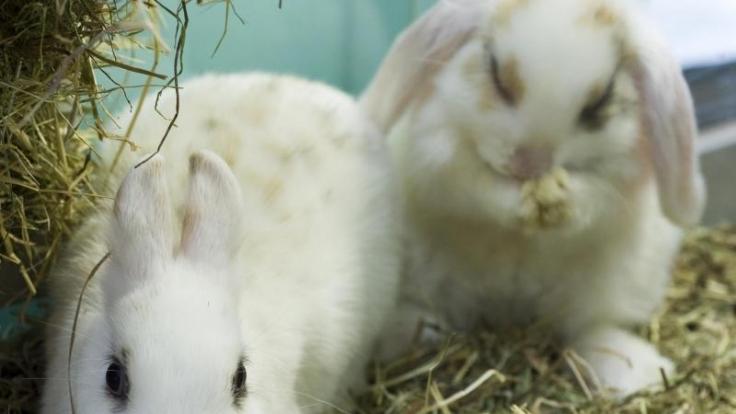 In einem der Crush-Videos soll einem Kaninchen bei lebendigem Leib das Fell abgezogen worden sein. (Symbolbild)