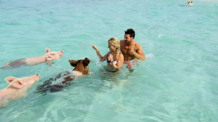 Sauereien mit Leonard und Leonie auf den Bahamas. (Foto)