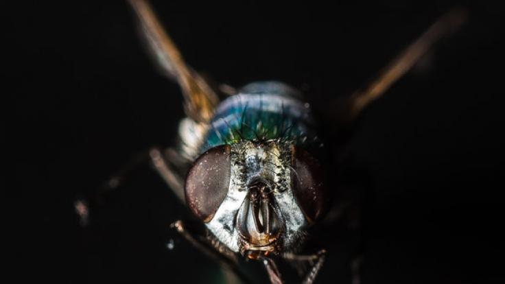 Fliegenplage Im Haus