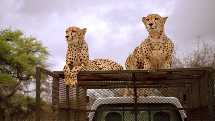 OLI's Wilde Welt - In Afrika bei KiKA (Foto)