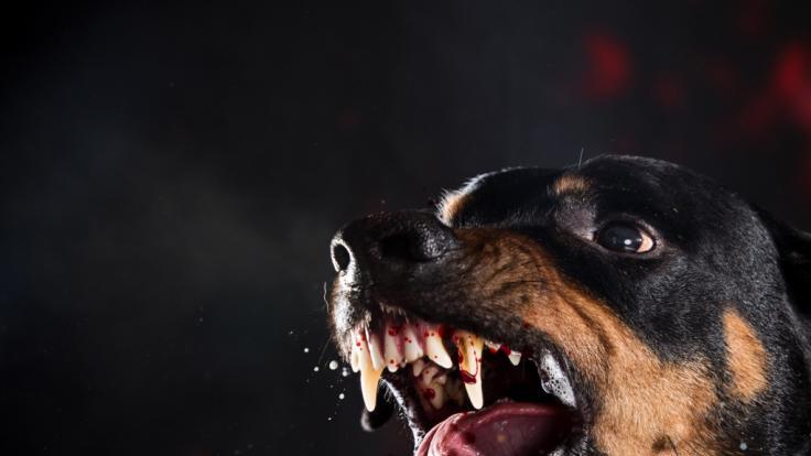 Hund verletzt Säugling lebensgefährlich