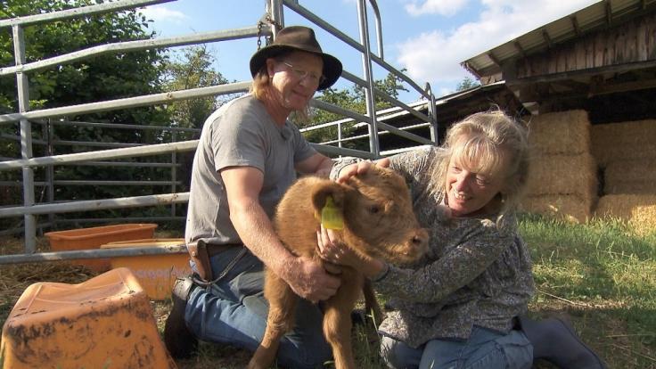 Rinderzüchter Lutz (52) aus Sachsen hat sein jüngstes Kalb Steffi getauft. (Foto)