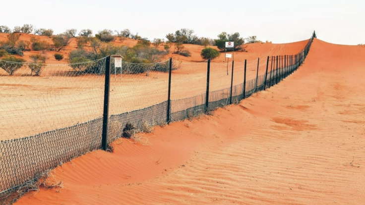 Weltspiegel-Reportage: Australien - Dingos oder Schafe? bei Das Erste (Foto)