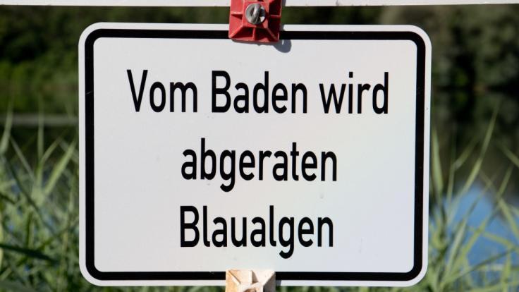 Landwirtschaftsministerium von Mecklenburg-Vorpommern warnt vor giftigen Blaualgen in der Ostsee. (Foto)