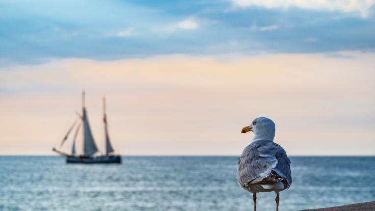 Auch an der Ost- und Nordsee müssen Corona-Regeln eingehalten werden.