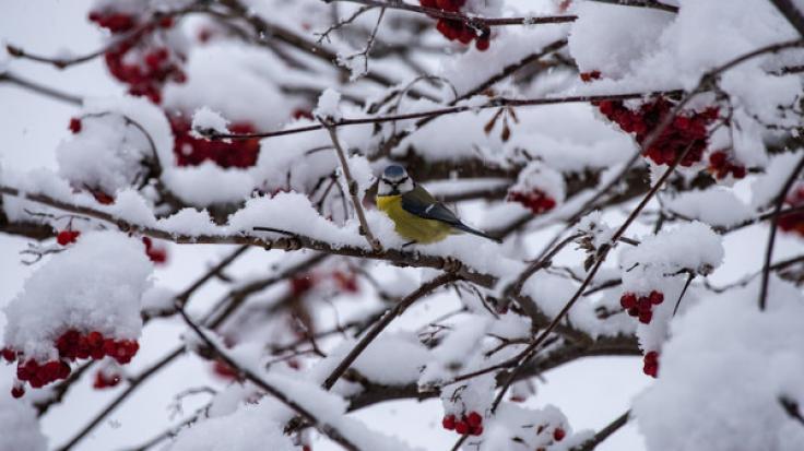 Das Wetter zeigt sich im Januar 2019 von seiner ungemütlichen Seite: Laut Wetterprognose des Deutschen Wetterdienstes wird es stürmisch und kalt.