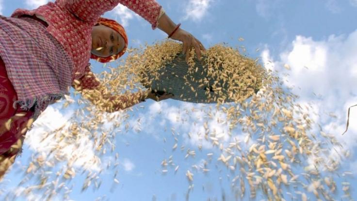 Die Landwirtschaft im Himalaya ist harte Arbeit - da brauchen Frauen häufig mehrere Männer. (Foto)