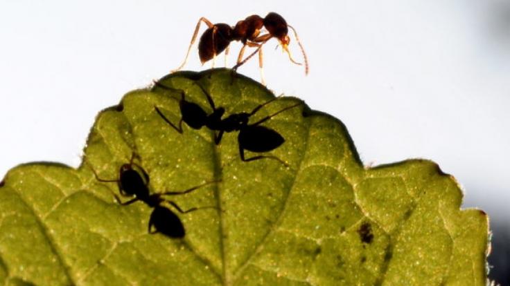 Weil ein Baby im Mülleimer entsorgt wurde, nagten Ameisen es lebendig an.