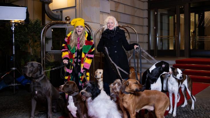 Diese Hunde versüßen das Shooting der Mädchen in Folge 4 von GNTM 2021. (Foto)