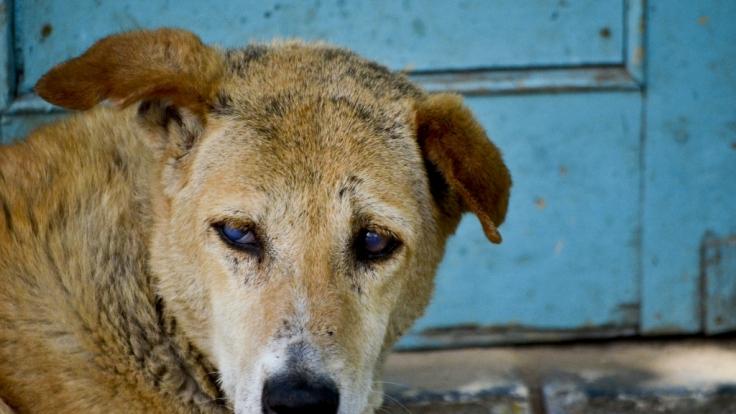 In Indien sollen Straßenhunde ein Baby getöten haben.
