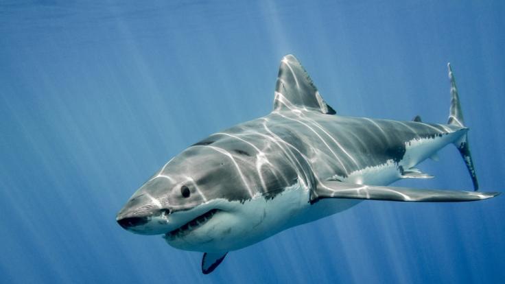 Vor der Küste Hawaiis starb ein Mann nach einer Hai-Attacke. (Foto)