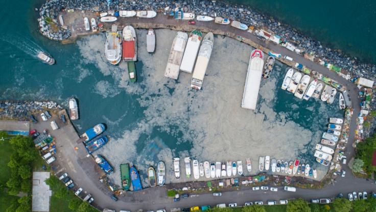 """Ein Schleimteppich, auch """"Meeresrotz"""" genannt, bereitet sich auf dem Marmarameer in der Türkei aus - mit tödlichen Folgen für die Unterwasserwelt. (Foto)"""