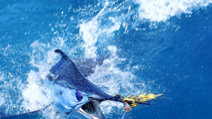 Australische Angler haben mit ihrem Fang einen Rekord aufgestellt. (Symbolbild)