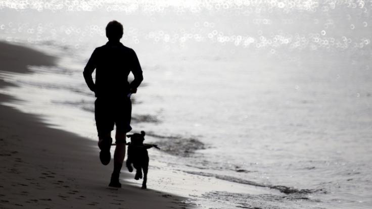 Ein Hund hat eine Joggerin angefallen. (Foto)