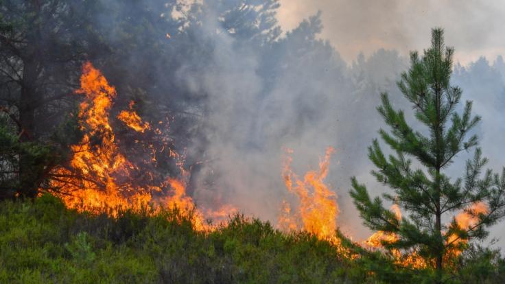 Feuer im Wald können schnell gefährlich werden für das eigene Leben. (Foto)