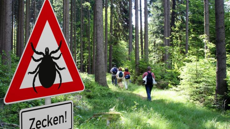 Zeckenexperten schlagen Alarm! Die gefährliche Tropenzecke Hyalomma breitet sich in Deutschland immer mehr aus. (Foto)