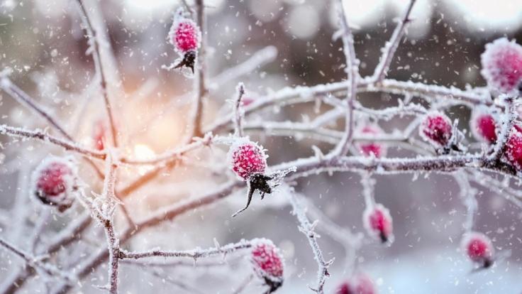 Welches Wetter prophezeit der Hundertjährige Kalender für Januar 2016?