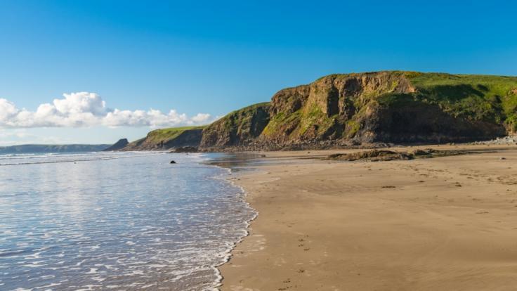 In Wales wurde ein gigantisches Meerungeheuer an den Strand gespült. Biologen sind ratlos. Um welche Art von Kreatur handelt es sich?