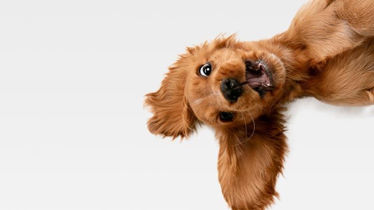 Da wird der Hund in der Pfanne verrückt! So manche Tier-Nachricht brachte uns 2019 zum Schmunzeln. (Foto)