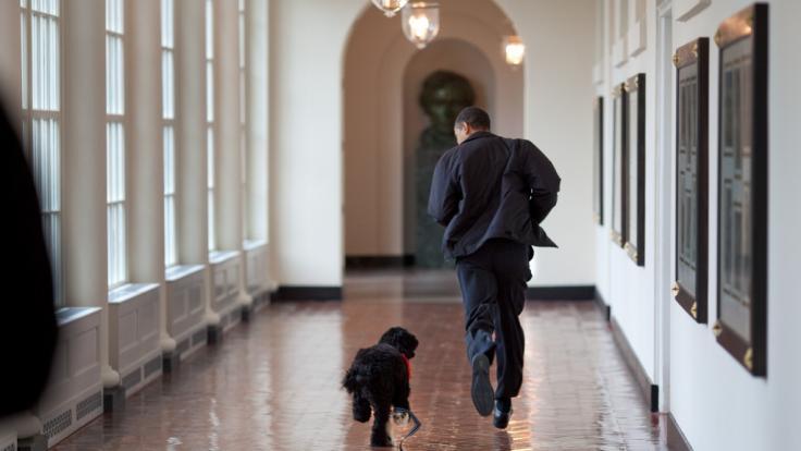 Barack Obama trauert um seinen toten Hund Bo. (Foto)