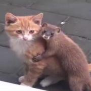 Tierischer Flirt