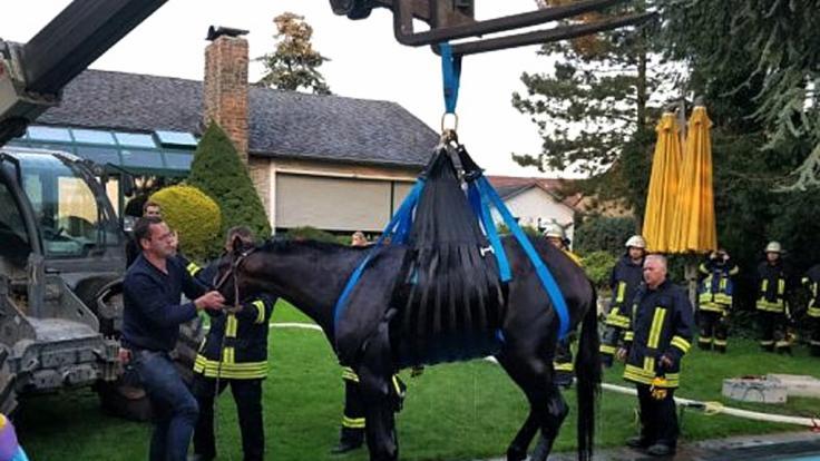 Mit einem Telelader hievt die Feuerwehr ein Pferd aus einem Pool. Das Pferd war in den privaten Pool gestürzt