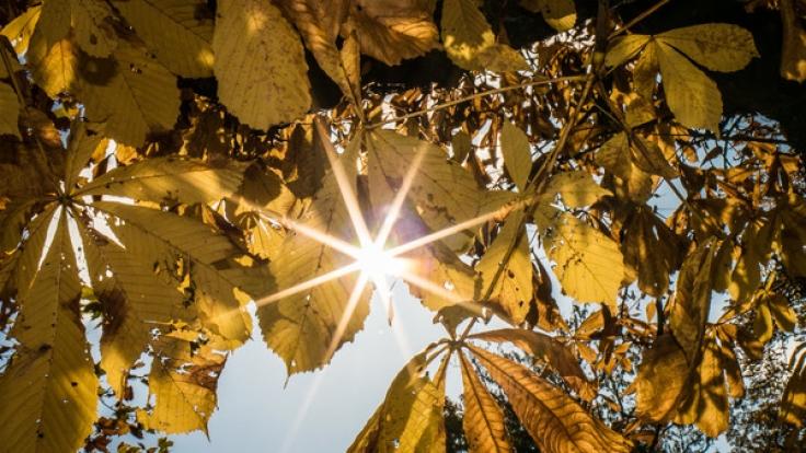 Erwartet Deutschland einen goldenen Oktober?