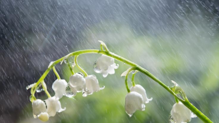 Wie wird das Wetter im Wonnemonat Mai? (Foto)