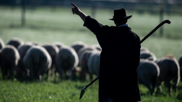 Der Coronavirus trifft auch die Landwirtschaft hart. (Foto)
