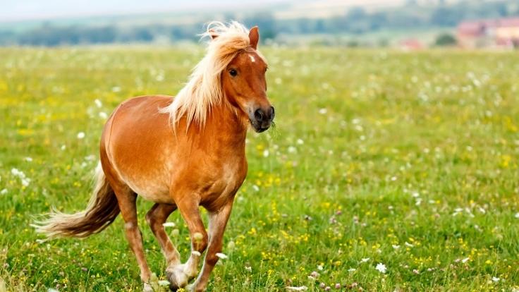 Nach einer Prügelattacke fordert ein Sodomist von Ponybesitzern nun ein Schmerzensgeld.